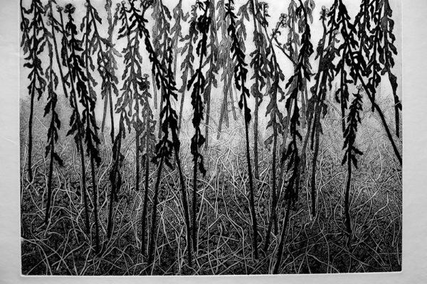 Day - Cecil Day, Grasses, Linocut 56 x 76 cm (2016)