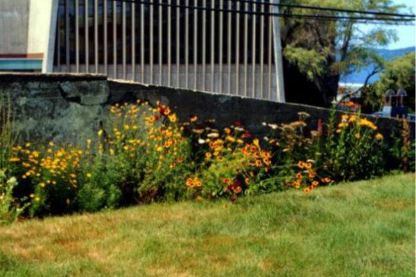 Mike MacDonald. Butterfly Garden. Perennial border, MSVU campus (1997)