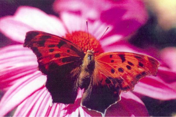 Mike Macdonald Digital Garden. Detail of placemat series 1 (1997)