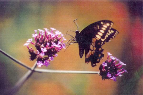Mike Macdonald Digital Garden. Detail of placemat series 5 (1997)