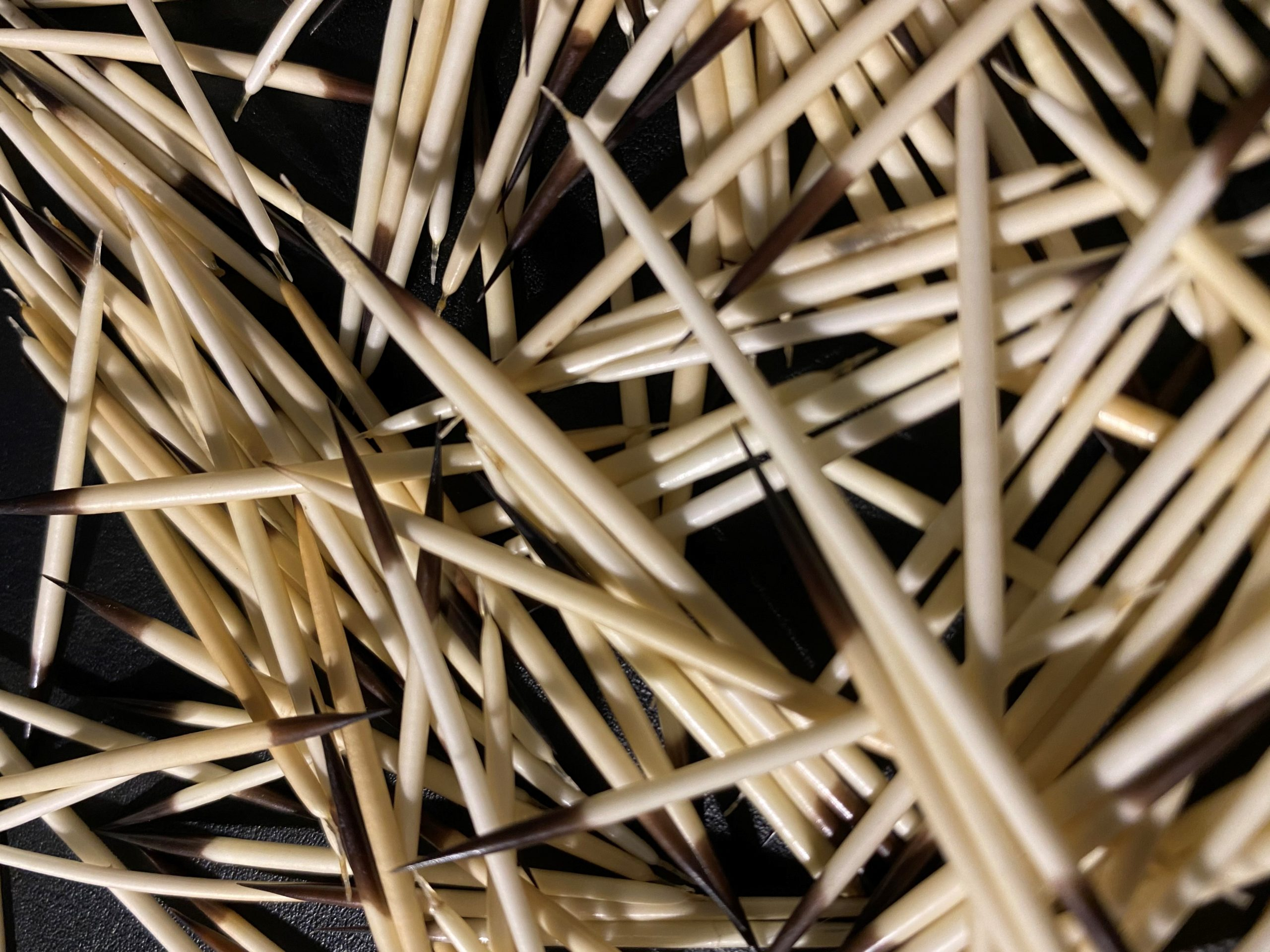 Close up image of porcupine quills